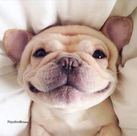 image عکس های شگفت انگیز از لحظه خندیدن حیوانات