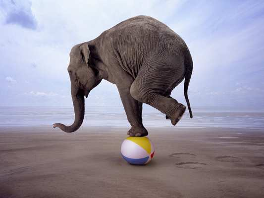 image داستان زیبا و آموزنده پسرک و فیل سیرک