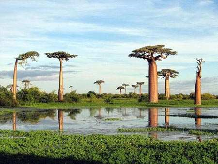 image, عکس و توضیحات تمام جاهای دیدنی ماداگاسکار