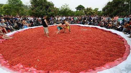image تصاویر دیدنی کشتی گرفتن در استخر گوجه فرنگی