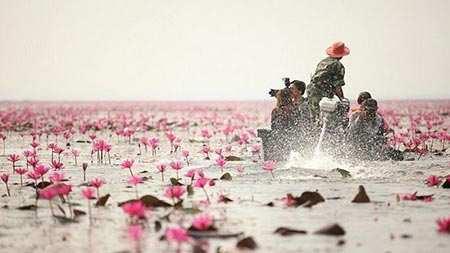 image, عکس های زیبا از دریاچه نیلوفر قرمز
