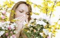 image, چه غذاهایی برای کسی که آلرژی بهاری دارد مناسب است