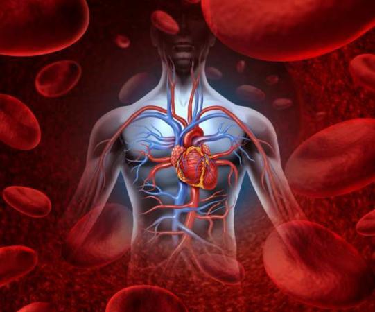 image بهترین خوراکی های برای داشتن خونی تمیز و سالم
