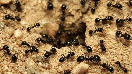 image جالب ترین اطلاعات خواندنی درباره مورچه ها