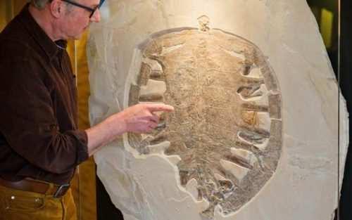 image عکس جالب فسیل ۱۵۰ میلیون ساله لاک پشت موزه بامبرگ آلمان
