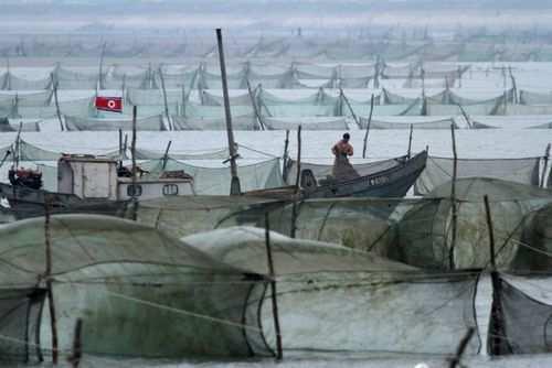 image تصویر دیدنی قایق های ماهیگیری صیادان کره شمالی