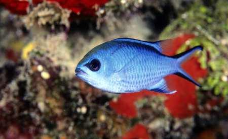 image واقعا همه ماهی ها بی احساس هستند یا دروغ است