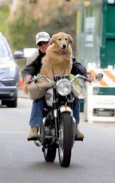 image, عکس بامزه موتور سواری سگی در لس آنجلس آمریکا