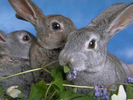 image آموزش کامل نحوه نگهداری خرگوش در خانه و غذاهای مورد علاقه اش