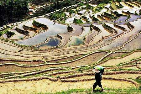 image, تصویری خارق العاده از شالیزار های زیبای چین