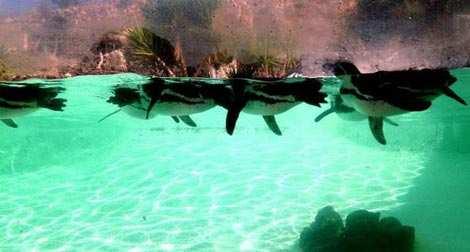 image, جزایر قناری کجاس همراه با عکس جاهای دیدنی آن