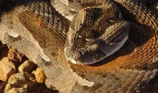 image عکس و توضیحات سمی ترین و خطرناک ترین مارها در جهان