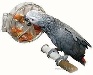 image, آموزش درست کردن اسباب بازی های سالم و جالب برای سرگرمی طوطی