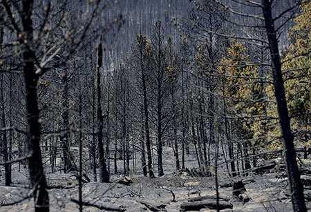 image, تصویر غم انگیز جنگل بعد از پایان آتش سوزی آمریکا