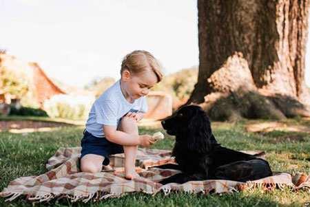 image, بازی پرنس جورج نتیجه سه ساله ملکه انگلیس با سگ خانوادگی