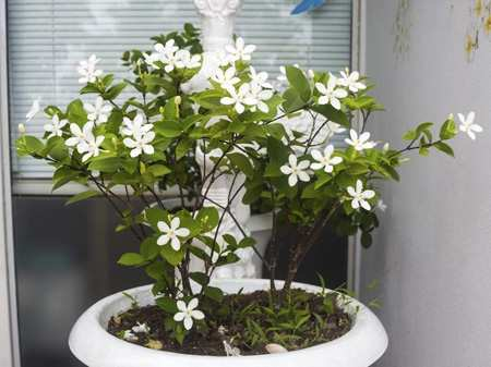 image, معرفی گیاهان آپارتمانی که هوای خانه را تمیز می کنند
