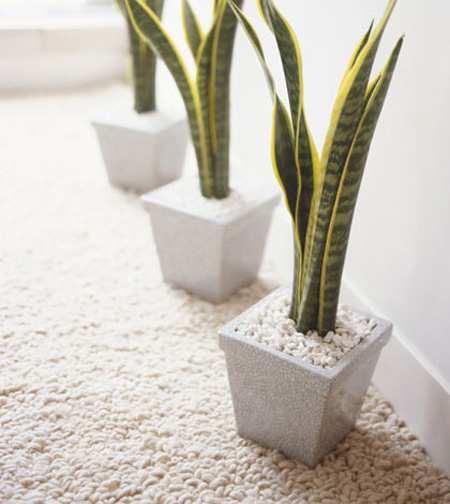 image معرفی گیاهان آپارتمانی که هوای خانه را تمیز میکنند