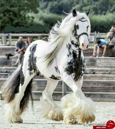 image, عکسی بی نظیر از زیباترین اسب در دنیا