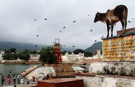 image تصویری زیبا از شهر پوشکار در راجستان هند