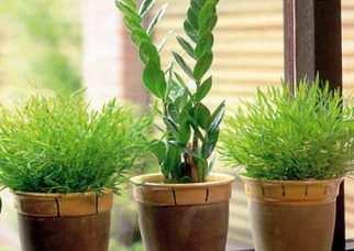 image آموزش کامل نگهداری از گیاهان سبز در آپارتمان های کوچک