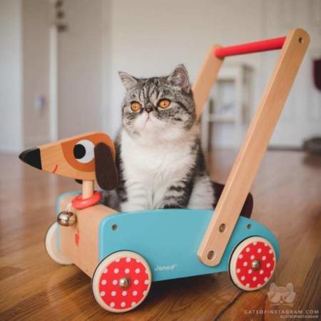 image عکس یک گربه تپل و بامزه روی یک ماشین بچگانه