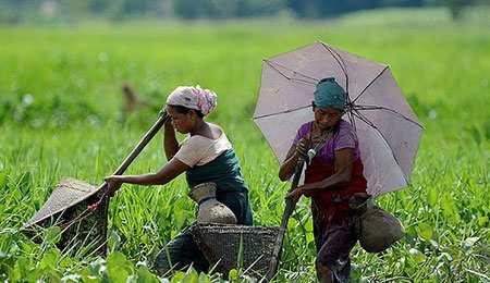 image تصویری زیبا از زنان ماهیگیر در مزرعه برنج هند