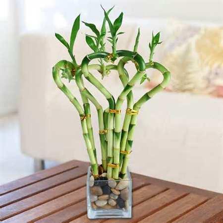 image, چطور در خانه های شیک و مدرن از گلدان های طبیعی استفاده کنیم