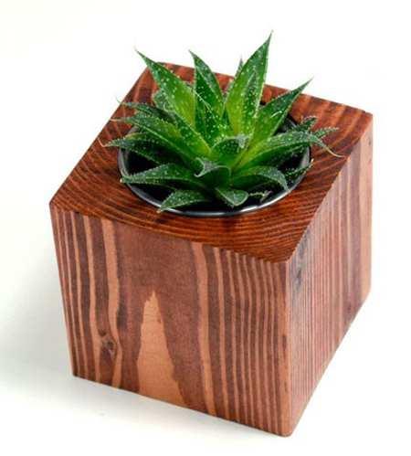 image چطور در خانه های شیک و مدرن از گلدان های طبیعی استفاده کنیم