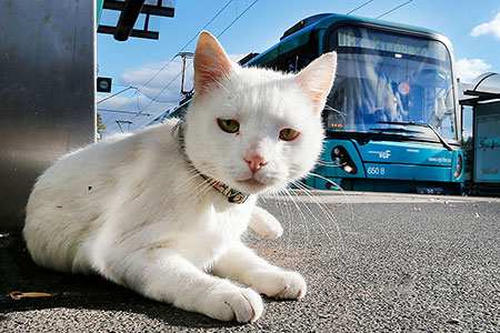 image, عکس یک گربه سفید رنگ دوست داشتنی