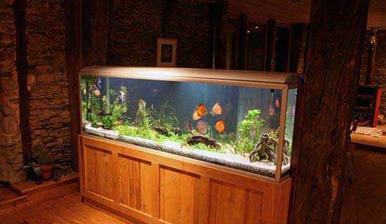 image نحوه استفاده از آکواریوم ماهی برای شیک شدن دکوراسیون