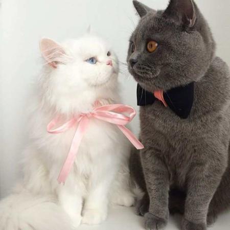 image, عکس های زیباترین و شیک ترین گربه دنیا با همسرش