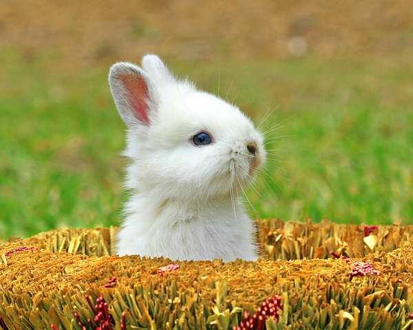image, عکس های زیبا و دیدنی از حیوانات بامزه