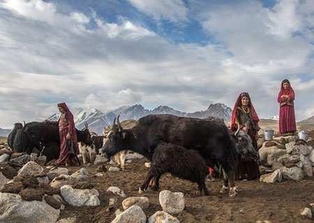 image, تصویری زیبا از زنان افغان هنگام دوشیدن شیر گاو
