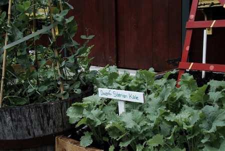 image, آموزش سرسبز نگهداشتن باغچه خانه در فصل پاییز