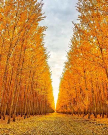 image زیباترین عکس گرفته شده تا به امروز از درختان پاییزی