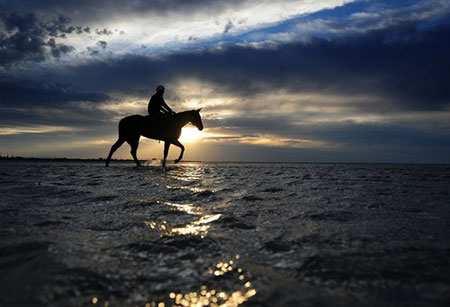 image, عکس زیبای یک اسب سوار در ساحل ملبورن استرالیا