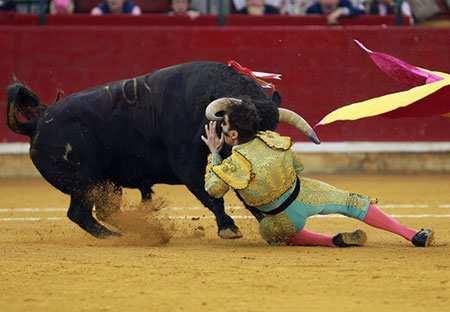 image صحنه ای جالب از گاو بازی در آراگون اسپانیا