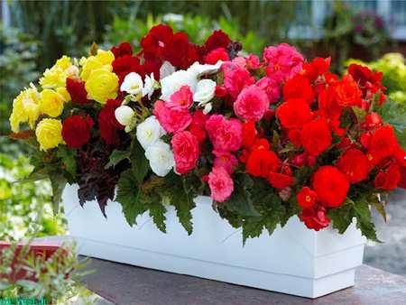 image, چطور گل های طبیعی را به رنگ مورد علاقه خود در بیاوریم