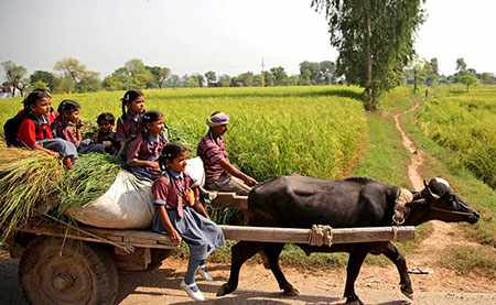image, تصویر کودکان هندی هنگام بازگشت از مدرسه با گاو سواری