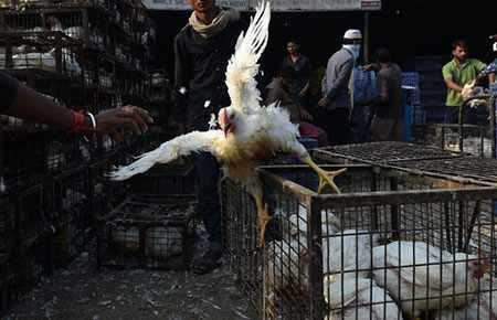 image, عکسی از بازار فروش ماکیان زنده دهلی نو
