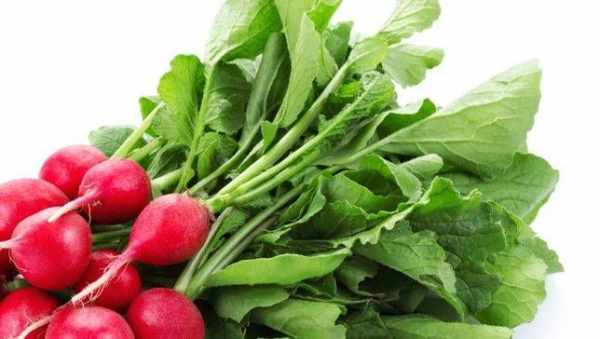 image, خاصیت های جالب تریچه قرمز در سبد سبزی برای سلامتی