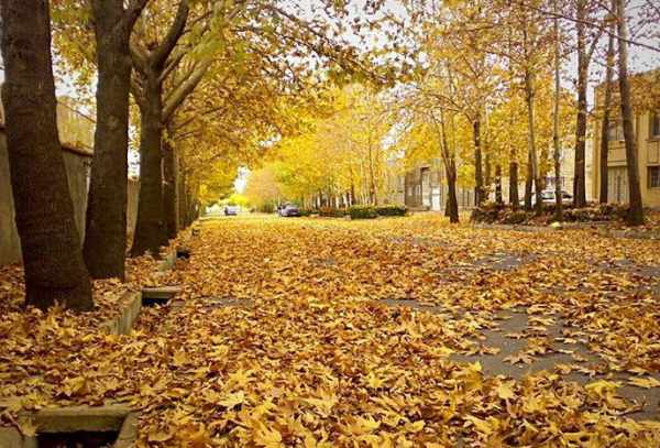 image, خیابانی فوق العاده زیبا پوشیده از برگ های رنگارنگ پاییزی