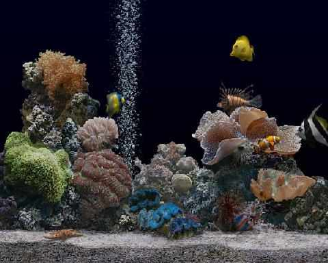 image, آموزش تعویض و تمیز کردن آب آکواریوم به سادگی