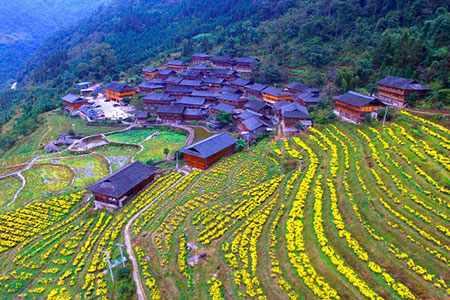 image تصویر دیدنی مزرعه گل داودی در چین