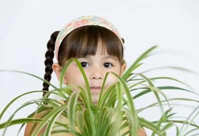 image, اسم و عکس گل هایی که برای بچه ها سمی هستند