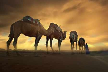 image عکس زیبا از صحرایی در جنوب مراکش زنی با کاروان شترها