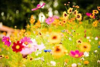 image, متن شعر زیبای آمد بهار و فصل گل افشانی از مهدیه الهی قمشه ای