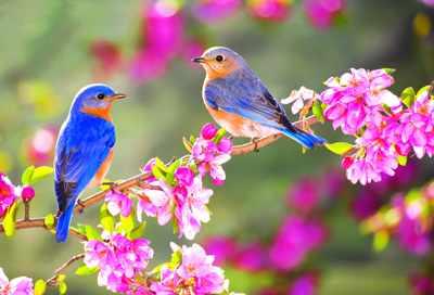 image, مجموعه شعرهای زیبا با موضوع آمدن بهار و عید نوروز