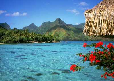 image شعر دل به بوی وصل آن گل آب و گل را ساخت جا شاعر سلمان ساوجی