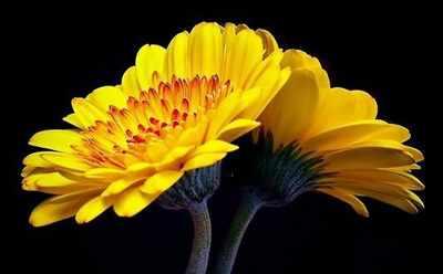 image, زندگی نامه مولانا جلالالدین مشهور به مولوی و شعری زیبا از او